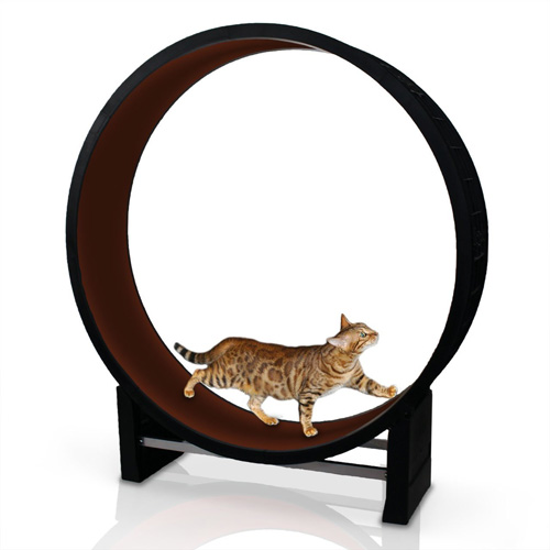 Katzenlaufrad kaufen - Laufrad für Katzen